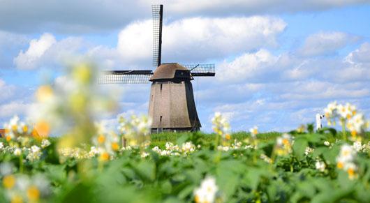 photo_windmill